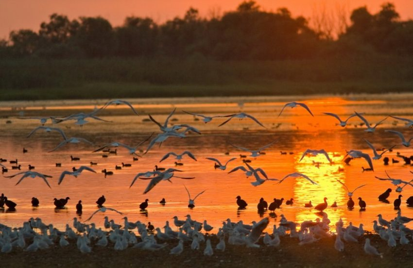 Danube Delta in Romania