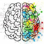The brain has an amazing unexplored ability: plasticity