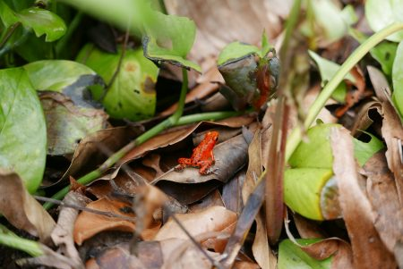 Red Frog Beach Bastimento Bocas del Toro