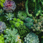 Must-know Tips for Succulent Beginners