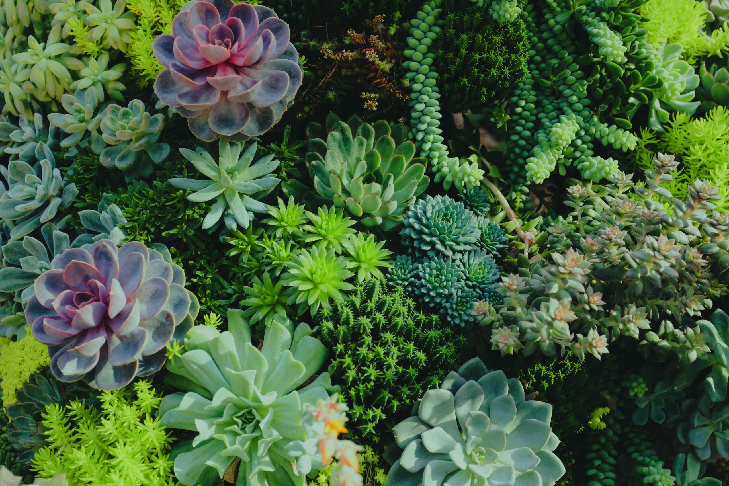 succulent care pot