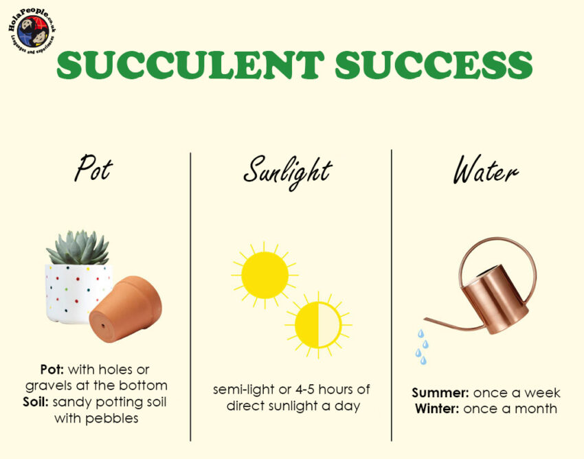 succulent tips care